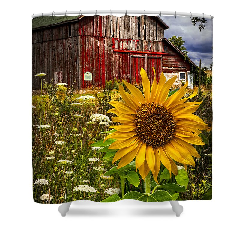 Barn Shower Curtain featuring the photograph Barn Meadow Flowers by Debra and Dave Vanderlaan
