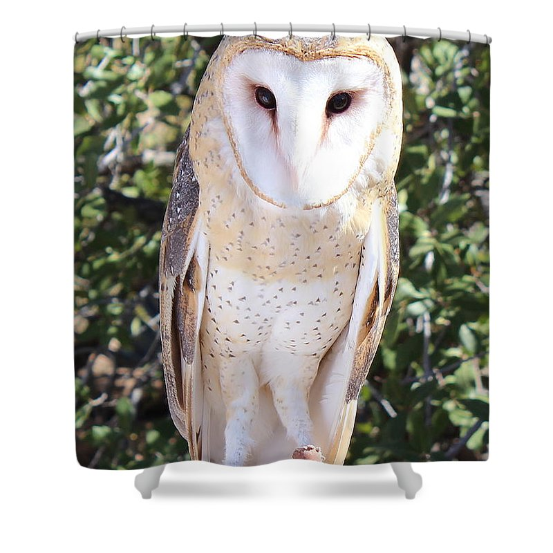 Barn Owl Shower Curtain featuring the photograph Barn Owl by Kume Bryant