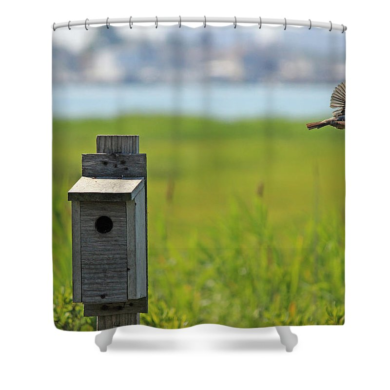 Barn Swallow Shower Curtain featuring the photograph Barn Swallow - A Contest Runner Up by Jake Danishevsky