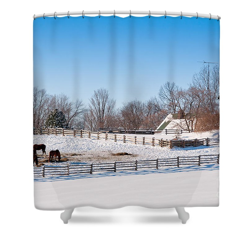 Horse Shower Curtain featuring the photograph Barn With Horses by Les Palenik