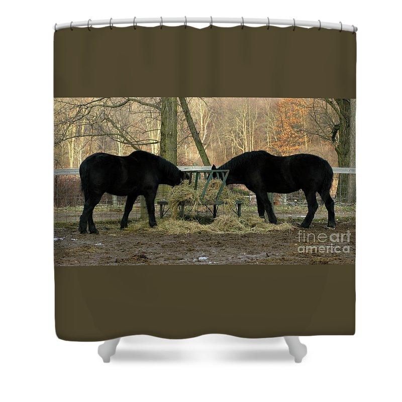 Horse Shower Curtain featuring the photograph Barnyard Beauties by Ann Horn