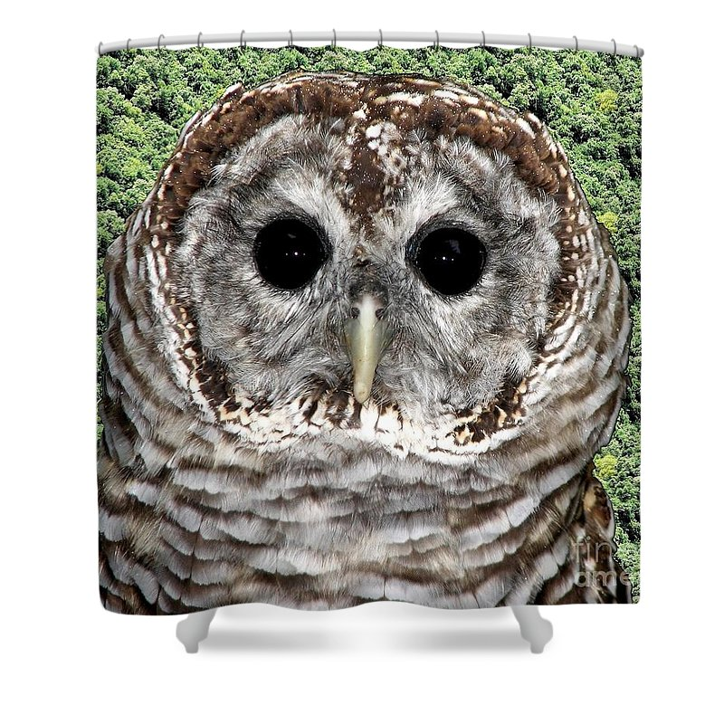 Barred Owl Shower Curtain featuring the photograph Barred Owl 1 by Rose Santuci-Sofranko