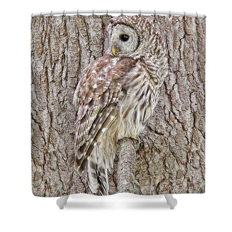 Owl Shower Curtain Featuring The Photograph Barred Camouflage By Jennie Marie Schell