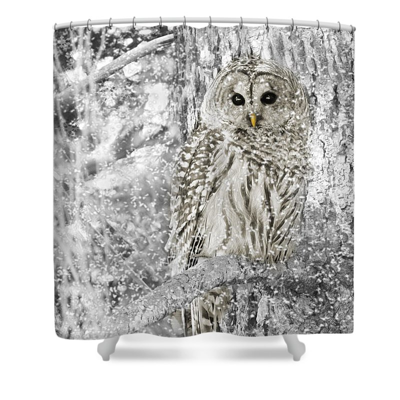 Owl Shower Curtain featuring the photograph Barred Owl Snowy Day In The Forest by Jennie Marie Schell