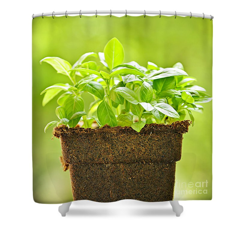 Basil Shower Curtain featuring the photograph Basil by Elena Elisseeva