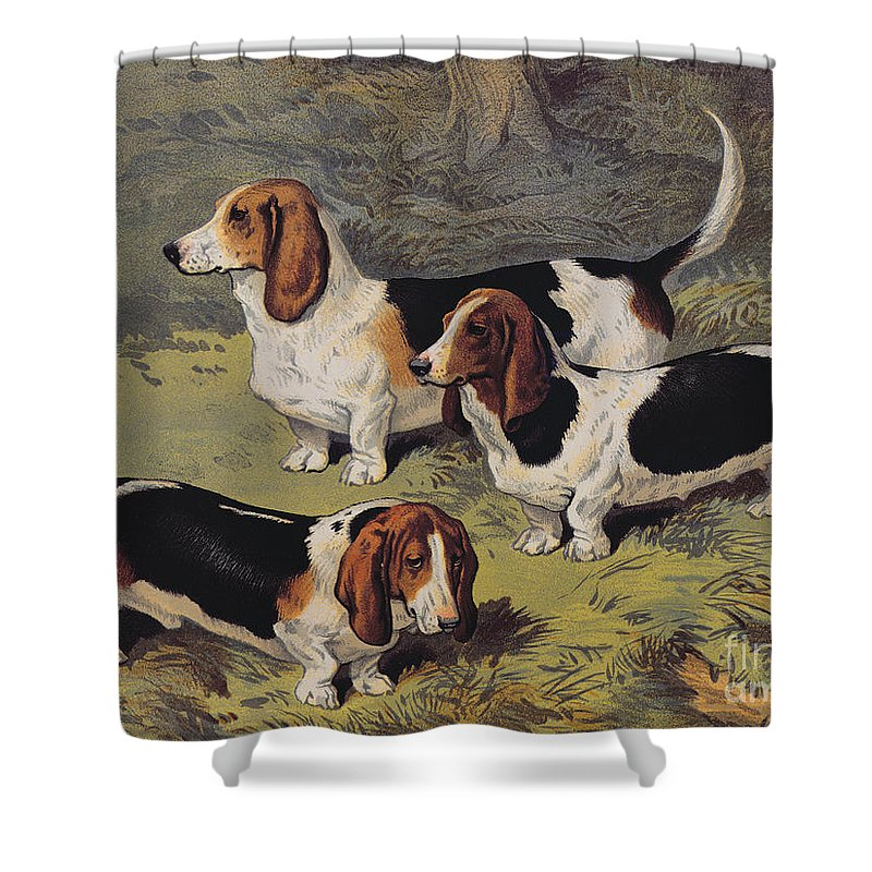 Dogs Shower Curtain featuring the painting Basset Hounds by English School