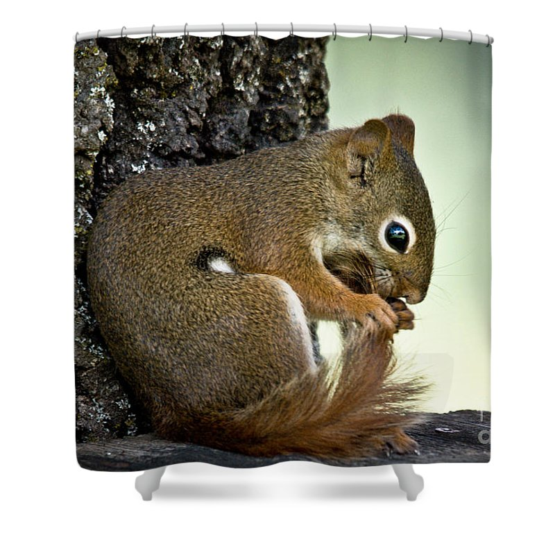 Squirrel Shower Curtain featuring the photograph Bath Time by Cheryl Baxter