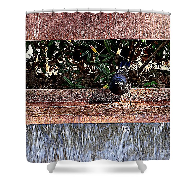 Nature Shower Curtain featuring the photograph Bath Time by Ed Weidman