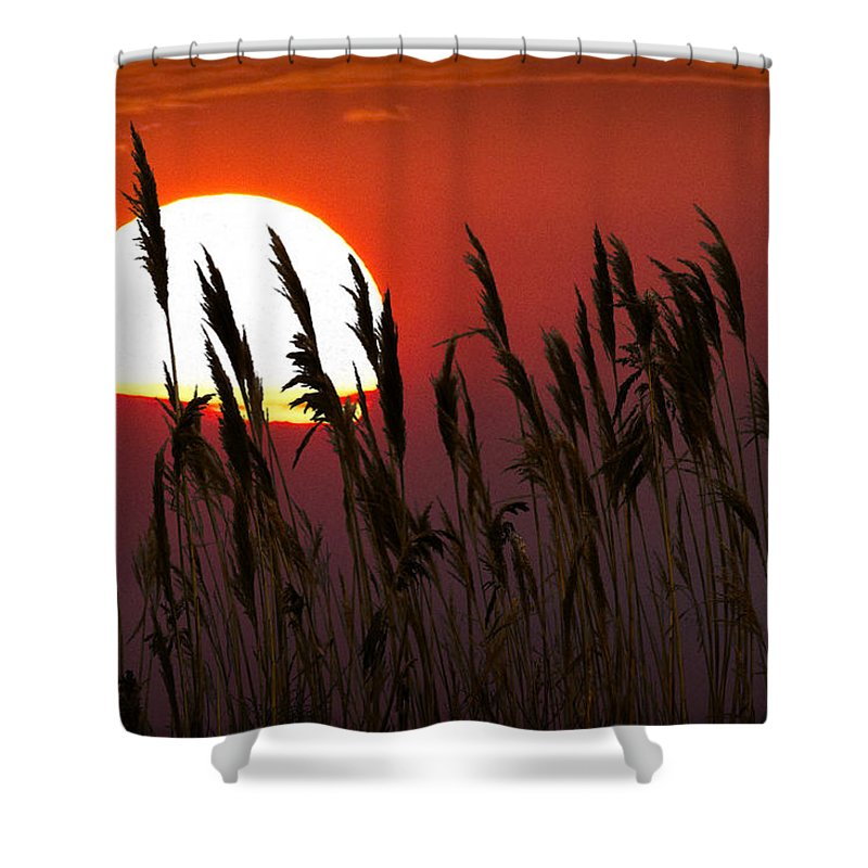 Art Shower Curtain featuring the photograph Beach Grass At Sunset by Randall Nyhof