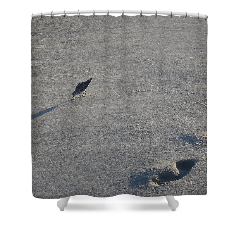 Beach Shower Curtain featuring the photograph Beachcombing Plover by Robert Nickologianis