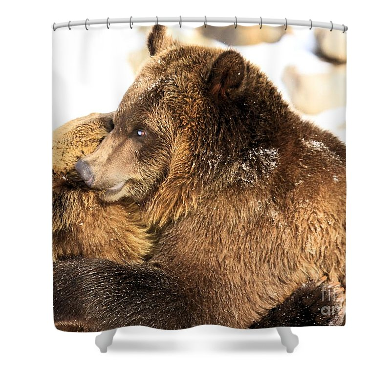 Grizzly Bear Shower Curtain featuring the photograph Bear Hug by Adam Jewell