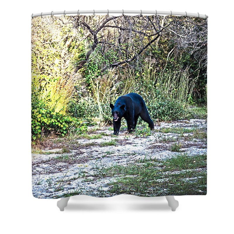 Bear Shower Curtain featuring the photograph Bearly Stroll by Judy Hall-Folde