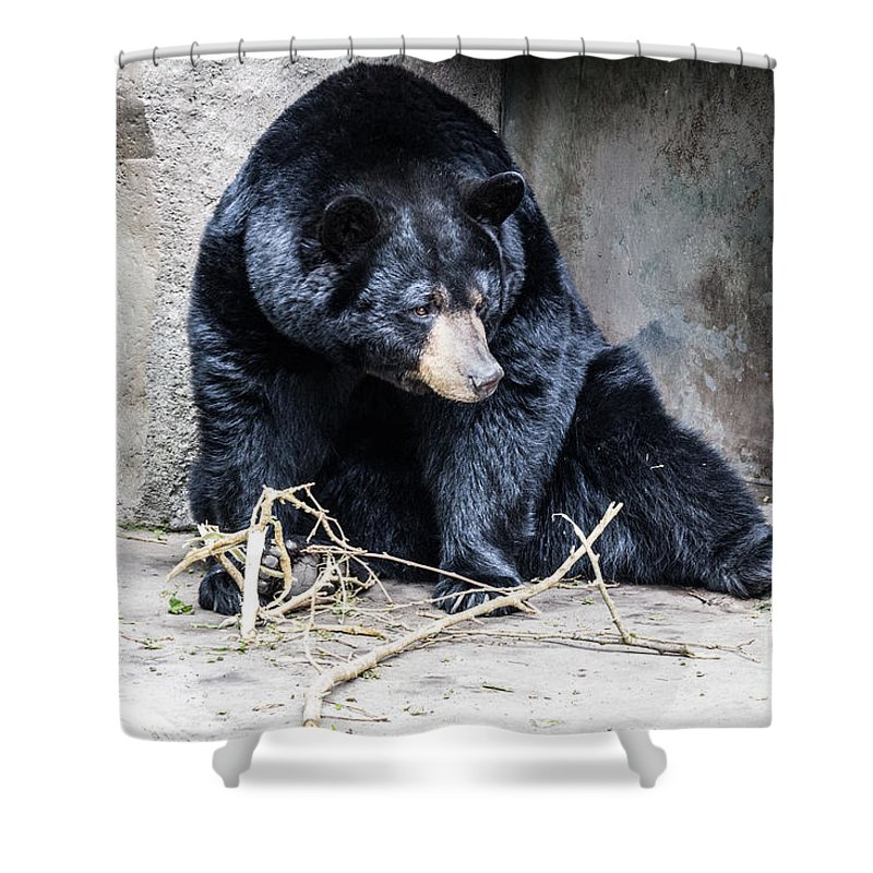 Black Bear Shower Curtain featuring the photograph Beary Cute by Suzanne Luft