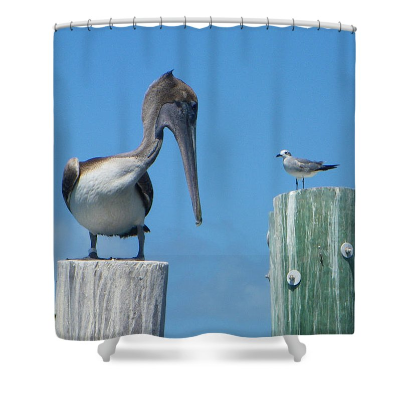 Pelican Shower Curtain featuring the photograph Beat It by Greg Graham
