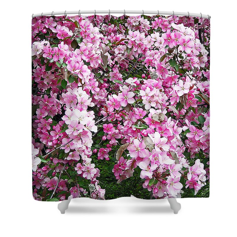 Tree Shower Curtain featuring the photograph Beautiful Blossoms by Aimee L Maher ALM GALLERY