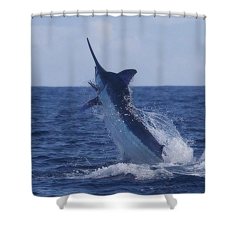 Marlin Shower Curtain featuring the drawing Beautiful Blue by Carol Lynne