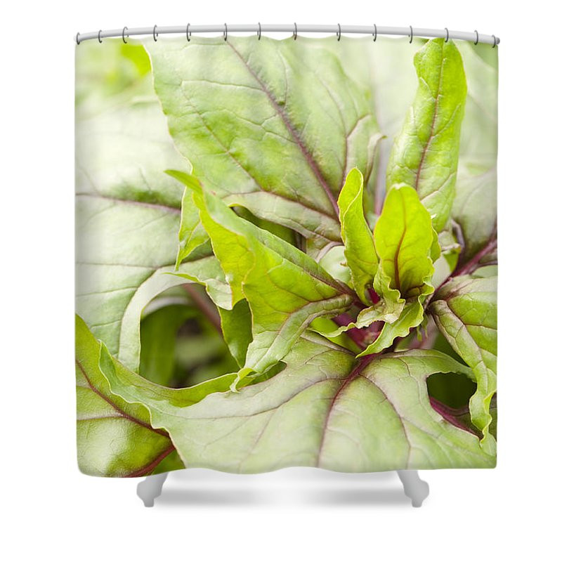 Amaranthaceae Shower Curtain featuring the photograph Beautiful Bordeaux by Anne Gilbert