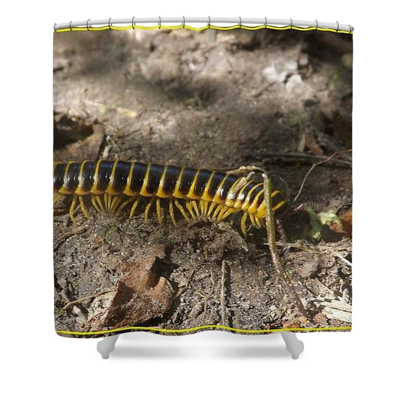Bug Shower Curtain featuring the photograph Beautiful Bug by Sara Raber