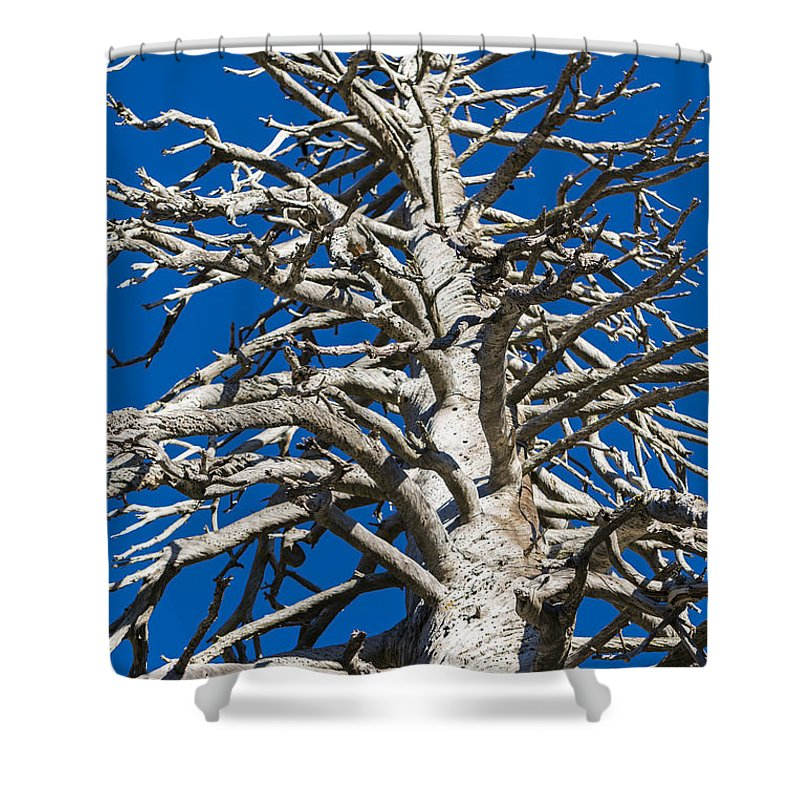 Pine Shower Curtain featuring the photograph Beautiful Even Naked by Scott Campbell