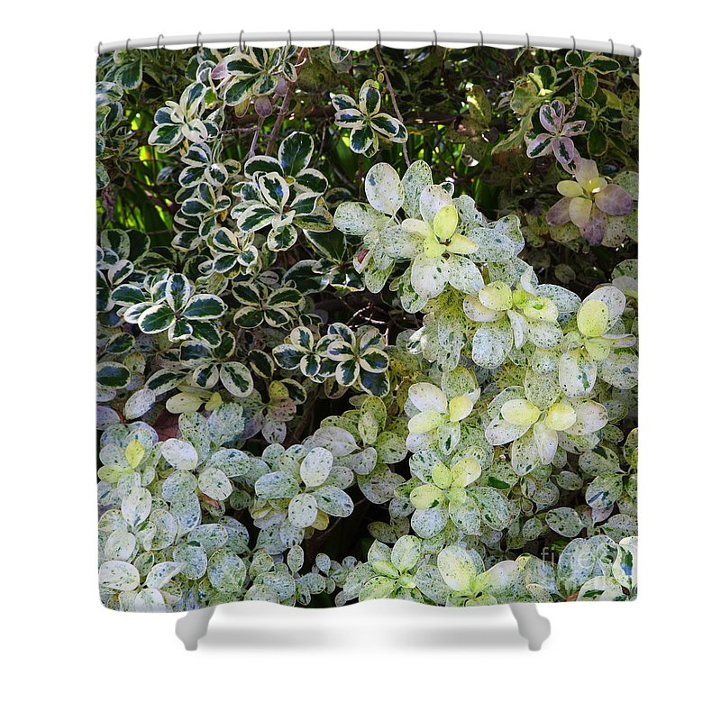 Shaded Shower Curtain featuring the photograph Beautiful Leaves by Nicholas Burningham