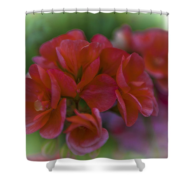 Rhs Shower Curtain featuring the photograph Beautiful Little Red Flowers by Maj Seda