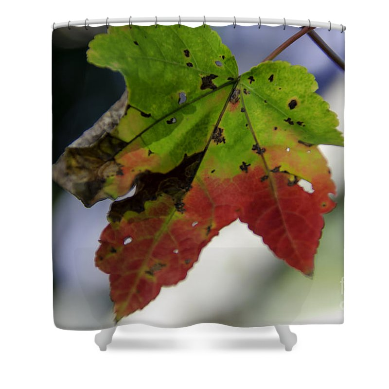 Maple Leaf Shower Curtain featuring the photograph Beautiful Maple Leaf by Dale Powell
