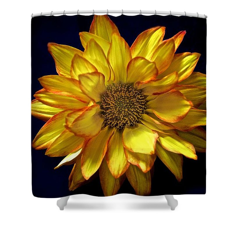 Daisy Prints Shower Curtain featuring the photograph Beautiful Petals by Kristina Deane