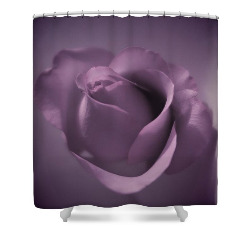 Floral Shower Curtain featuring the photograph Beautiful Purple Rose by Tara Shalton