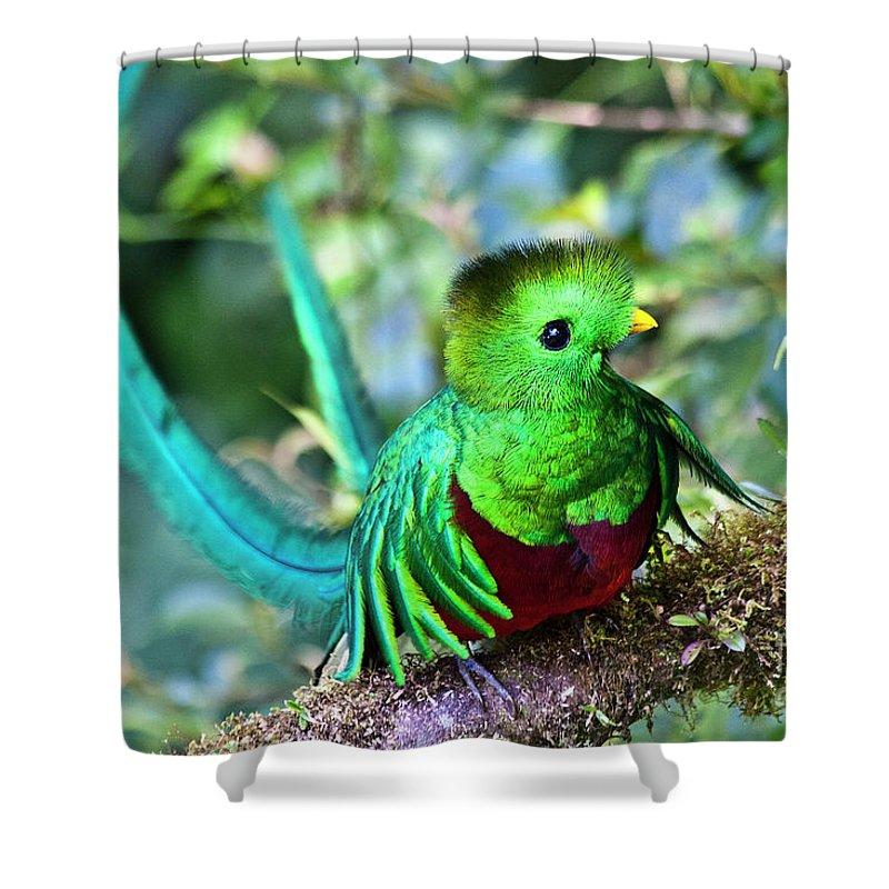 Bird Shower Curtain featuring the photograph Beautiful Quetzal 5 by Heiko Koehrer-Wagner