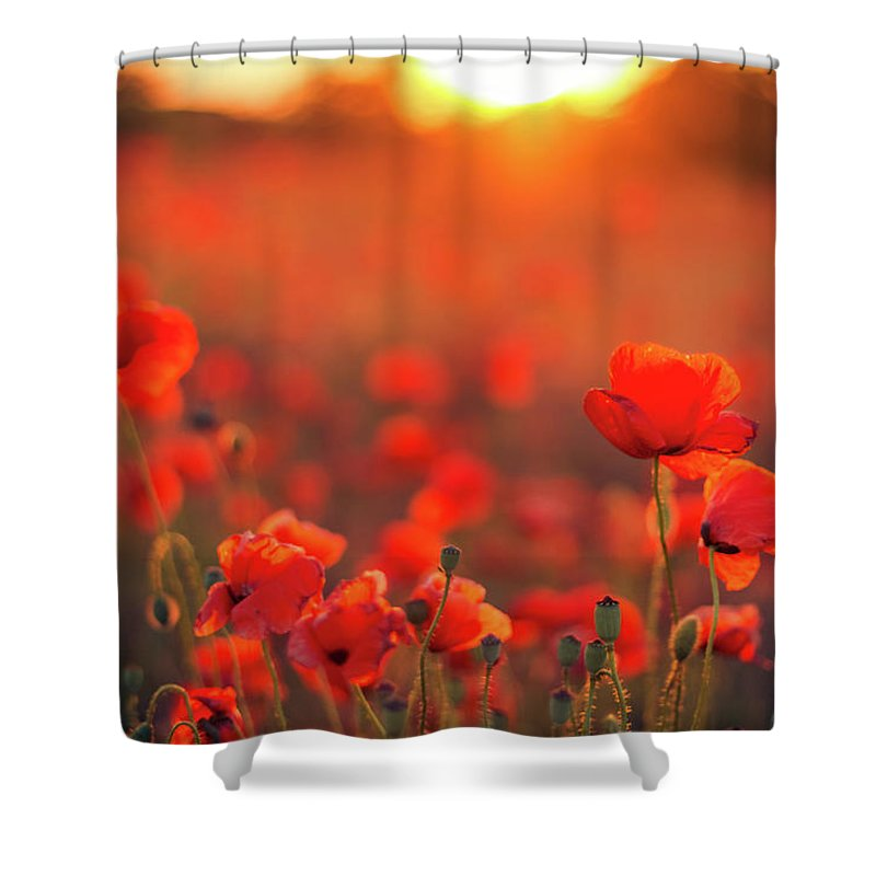 Tranquility Shower Curtain featuring the photograph Beautiful Sunset Over Poppy Field by Levente Bodo