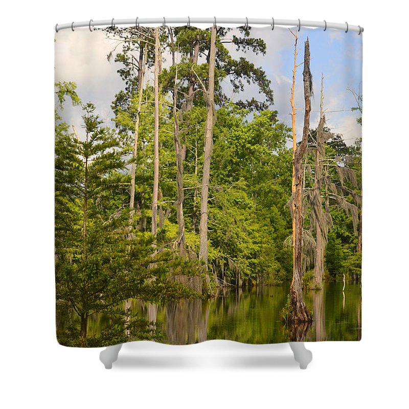 Trees Shower Curtain featuring the photograph Beauty In A Swamp by Leticia Latocki