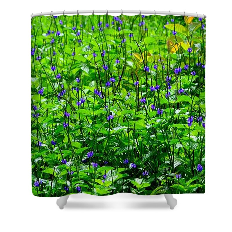 Flowers Shower Curtain featuring the photograph Beauty In The Meadow by Mary Deal