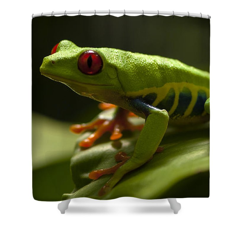 Frog Shower Curtain featuring the photograph Beauty Of Tree Frogs Costa Rica 3 by Bob Christopher