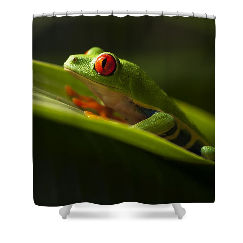Frog Shower Curtain featuring the photograph Beauty Of Tree Frogs Costa Rica 7 by Bob Christopher