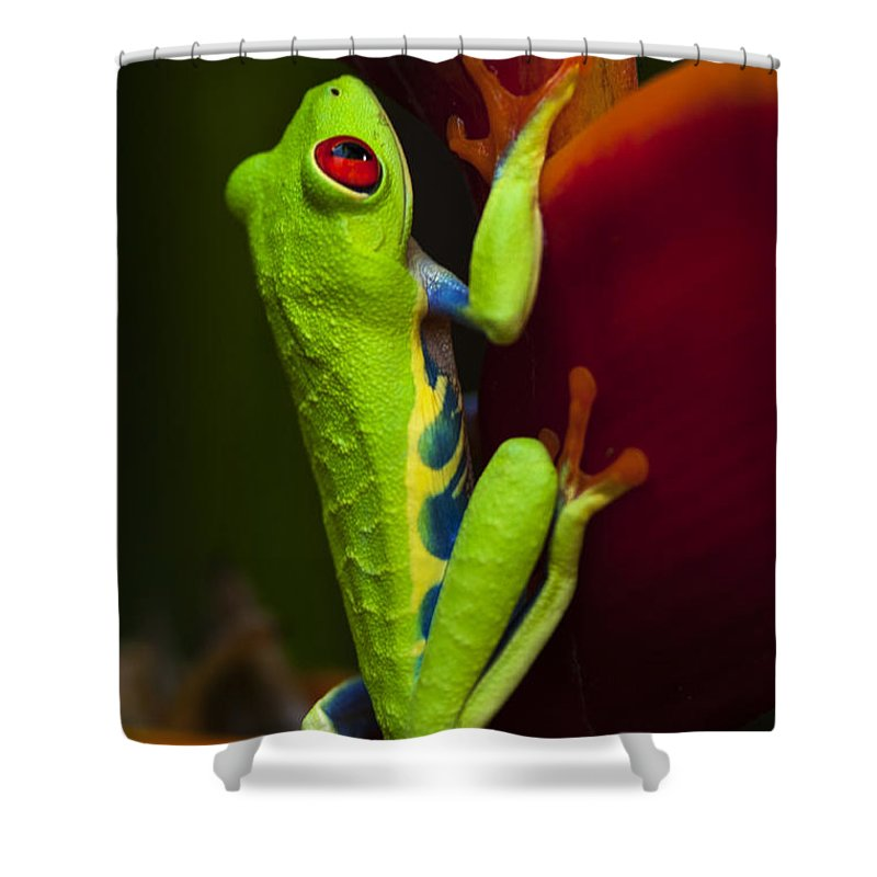 Frog Shower Curtain featuring the photograph Beauty Of Tree Frogs Costa Rica 9 by Bob Christopher