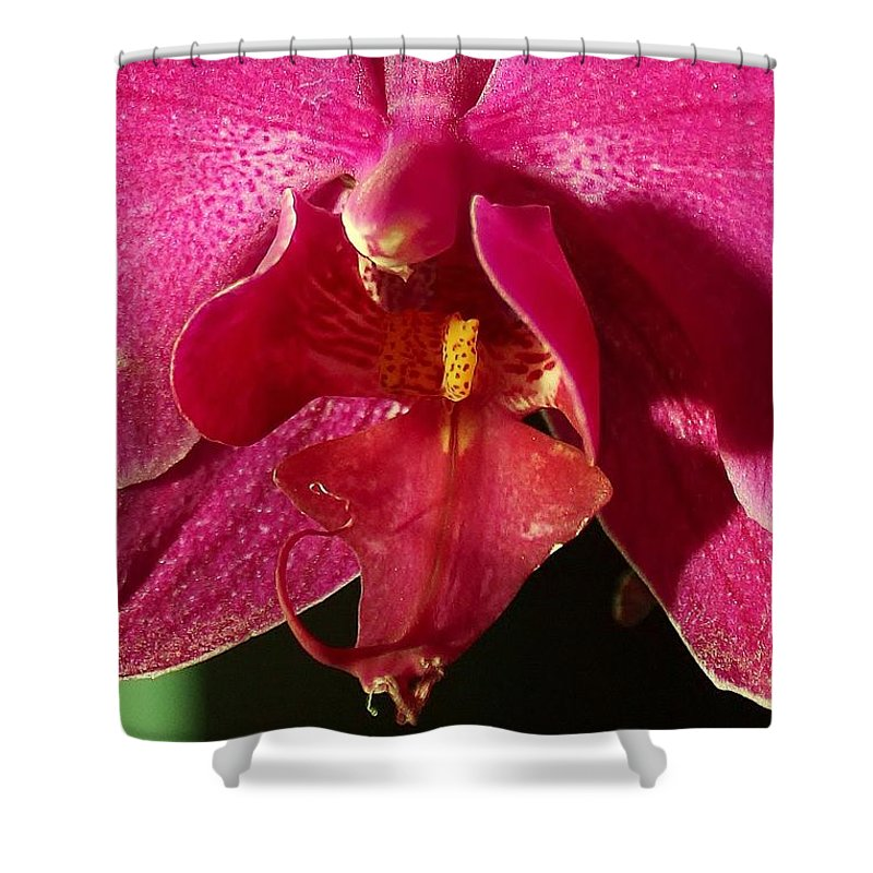 Flowers Shower Curtain featuring the photograph Bee Appeal To Pollinate by Rene Triay Photography