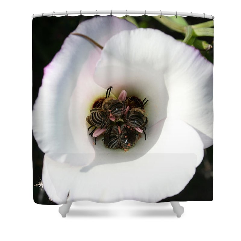 Bee-in Shower Curtain featuring the photograph Bee-In by Ellen Henneke