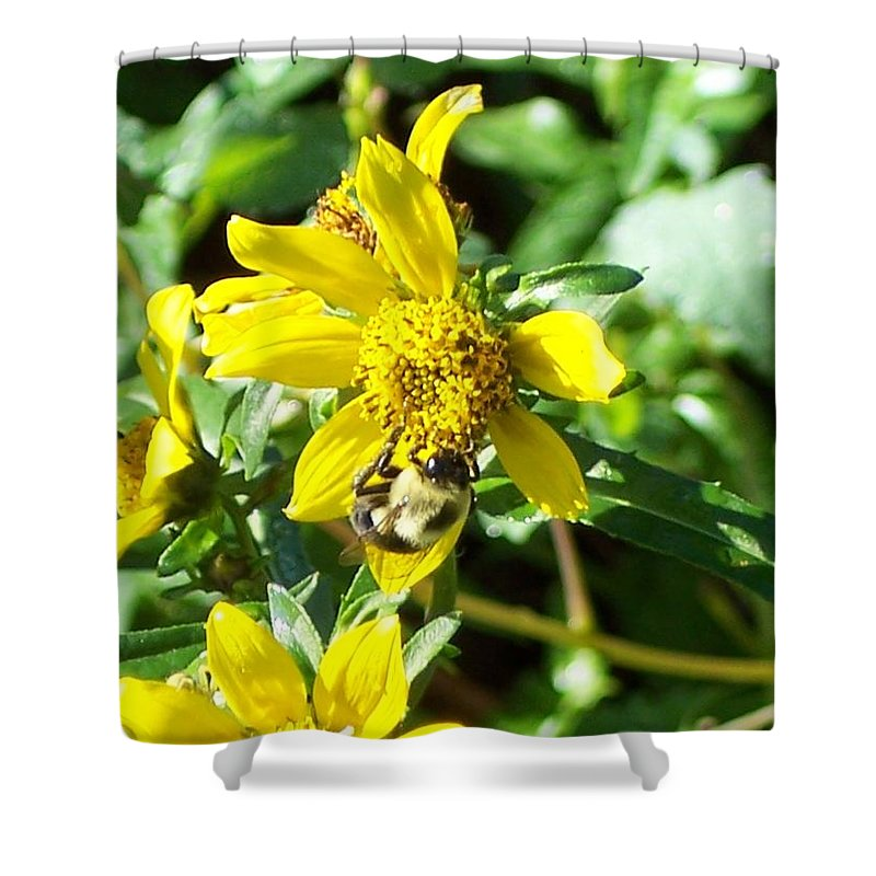 Bee Shower Curtain featuring the photograph Bee On Flower by Michelle Miron-Rebbe