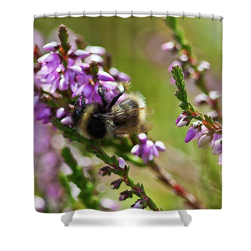 Animal Shower Curtain featuring the photograph Bee On Heather by Roberto Pagani