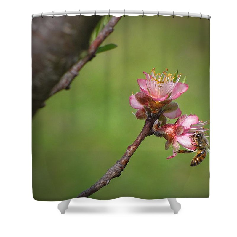 Nature Shower Curtain featuring the photograph Bee On Peach Bloom by Matt Taylor
