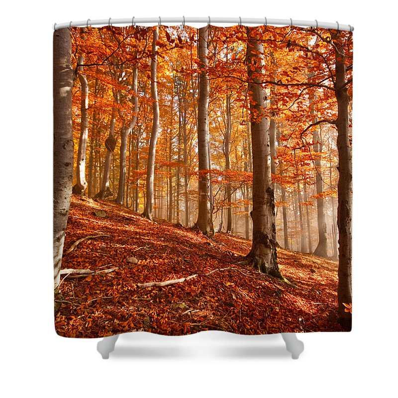 Slovakia Shower Curtain featuring the photograph Beech Forest by Milan Gonda