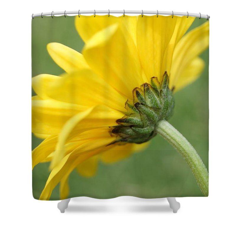 Flower Shower Curtain featuring the photograph Behind The Petals by Kerri Mortenson