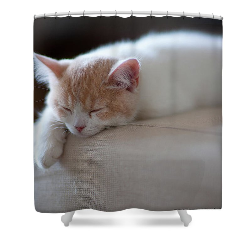 Pets Shower Curtain featuring the photograph Beige And White Kitten Sleeping On by Benjamin Torode