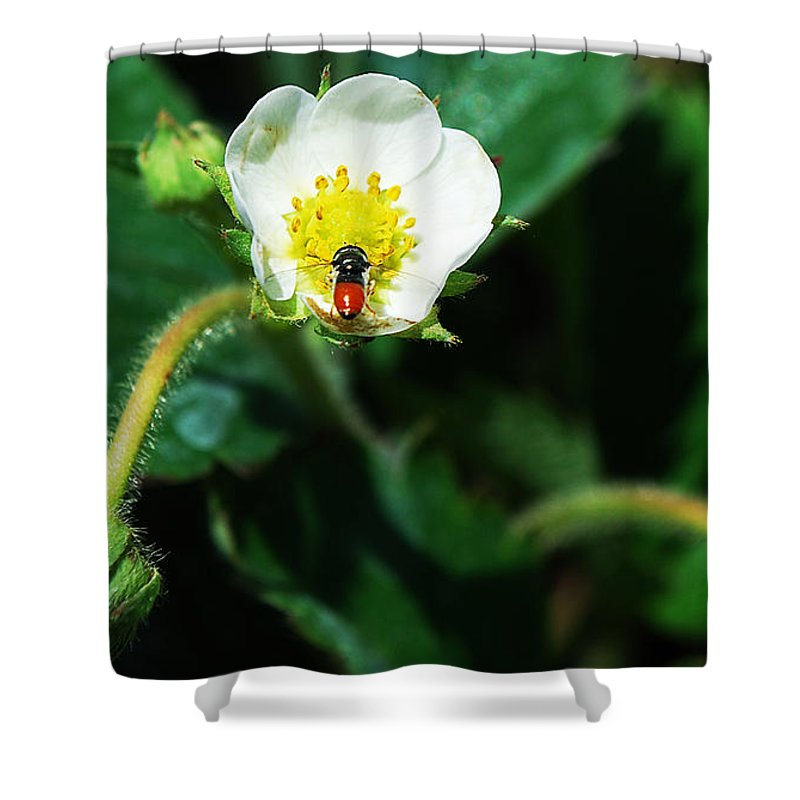 Becky Furgason Shower Curtain featuring the photograph #berry by Becky Furgason