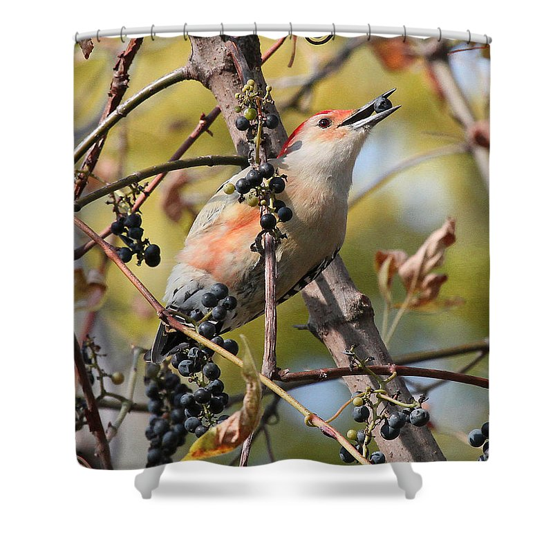 Red-bellied Woodpecker Shower Curtain featuring the photograph Berry Good by Mike Dickie