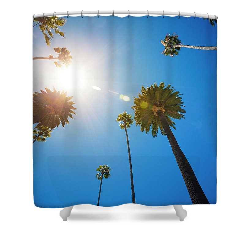 Beverly Hills Shower Curtain featuring the photograph Beverly Hills Palm Trees by Lpettet