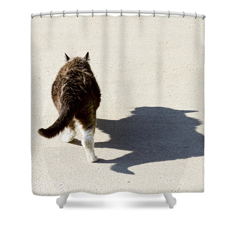 Cat Shower Curtain featuring the photograph Big Cat Ferocious Shadow by James BO Insogna