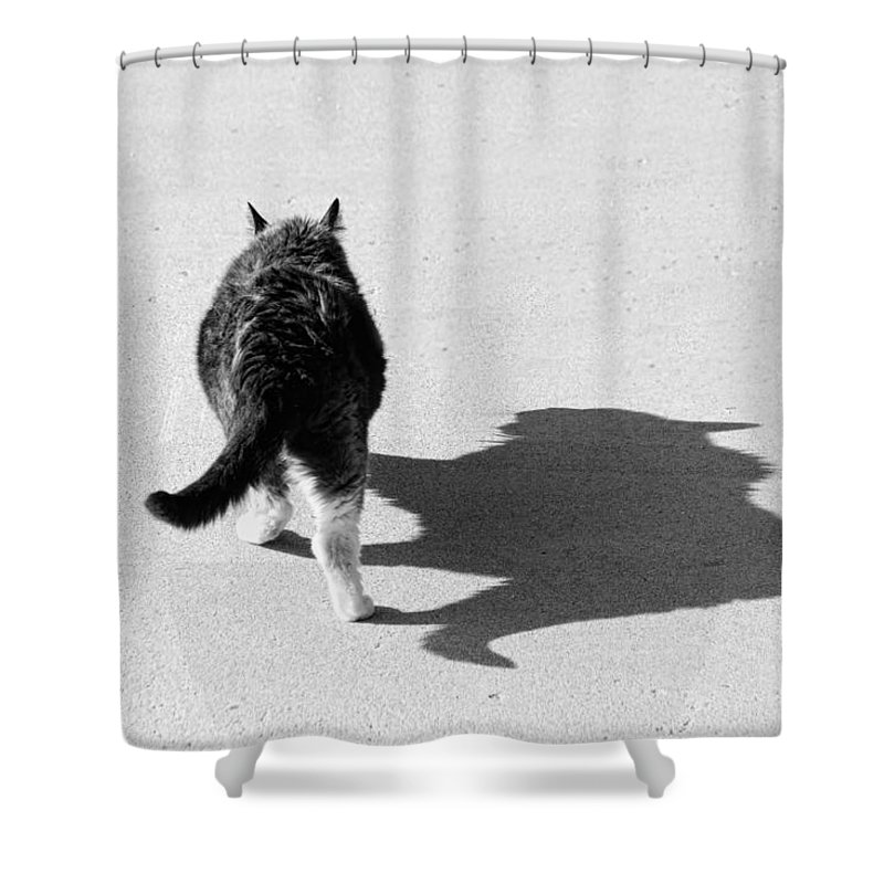 Cat Shower Curtain featuring the photograph Big Cat Ferocious Shadow Monochrome by James BO Insogna