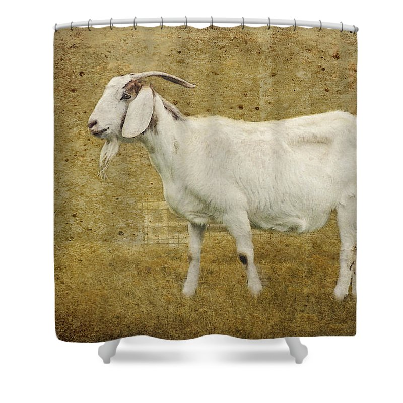 Goat Shower Curtain Featuring The Photograph Billy Gruff By Betty LaRue
