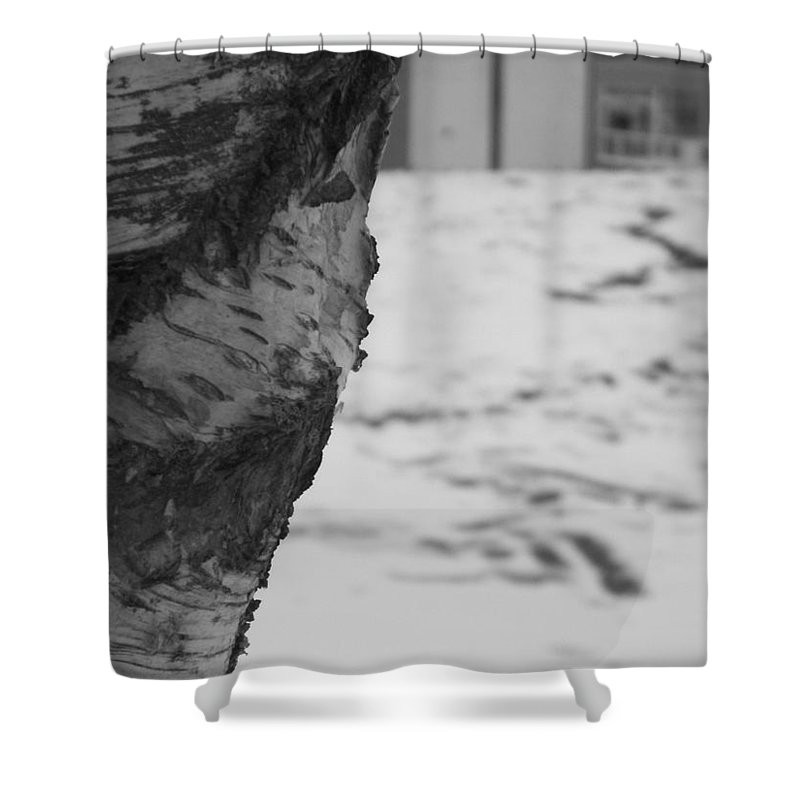 Birch Shower Curtain featuring the photograph Birch Bark And Snow In Black And White by Katie Beougher